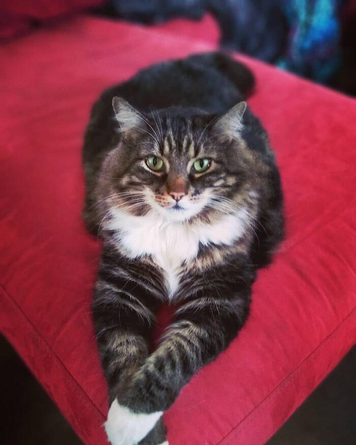 My Giant Model Kitty, Moose