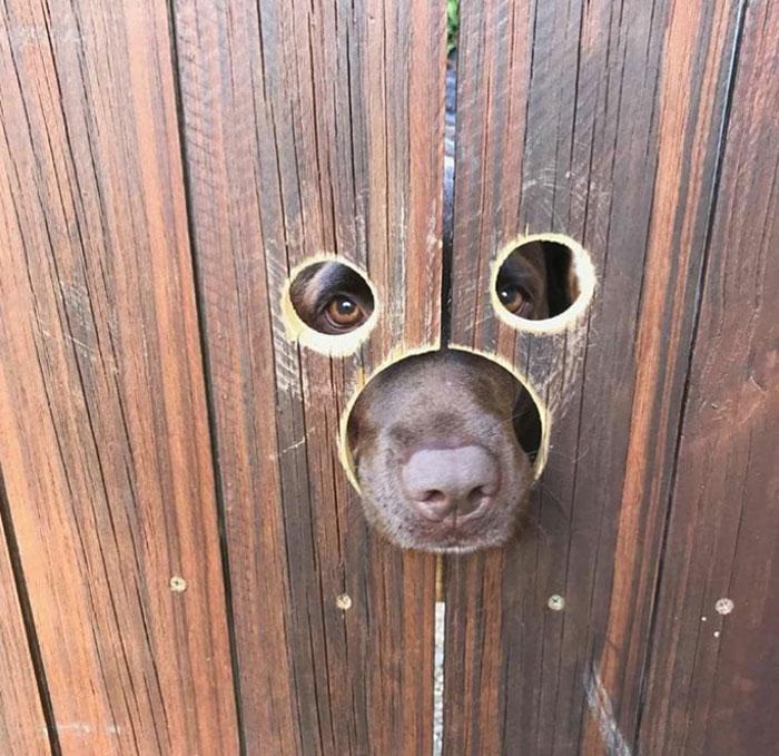El vecino adoptó un perro y mi padre hizo unos agujeros en la valla