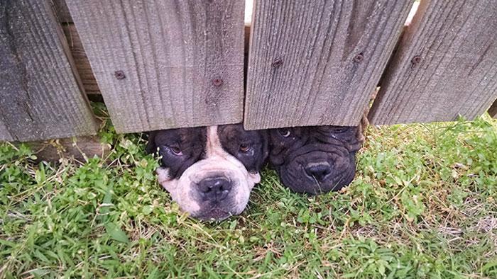 Tengo unos vecinos cotillas