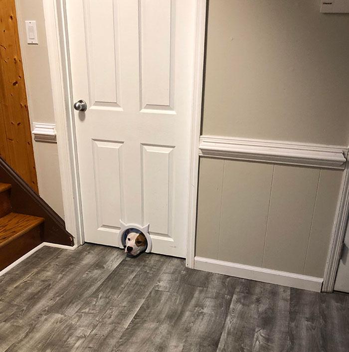 Mirando a través del agujero del gato