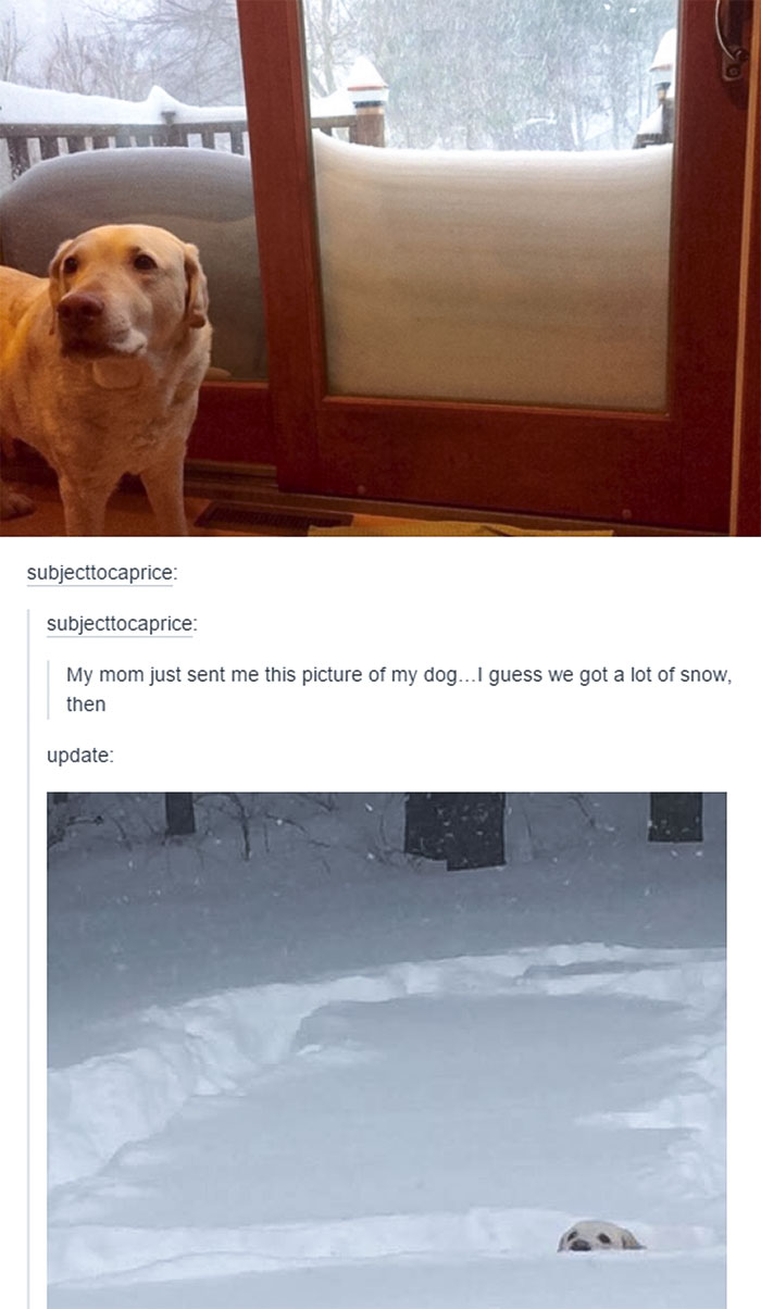 That's A Lot Of Snow