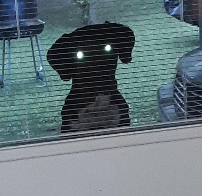 Tomé una foto del perro del vecino asomándose por mi puerta y resultó un poco aterrador