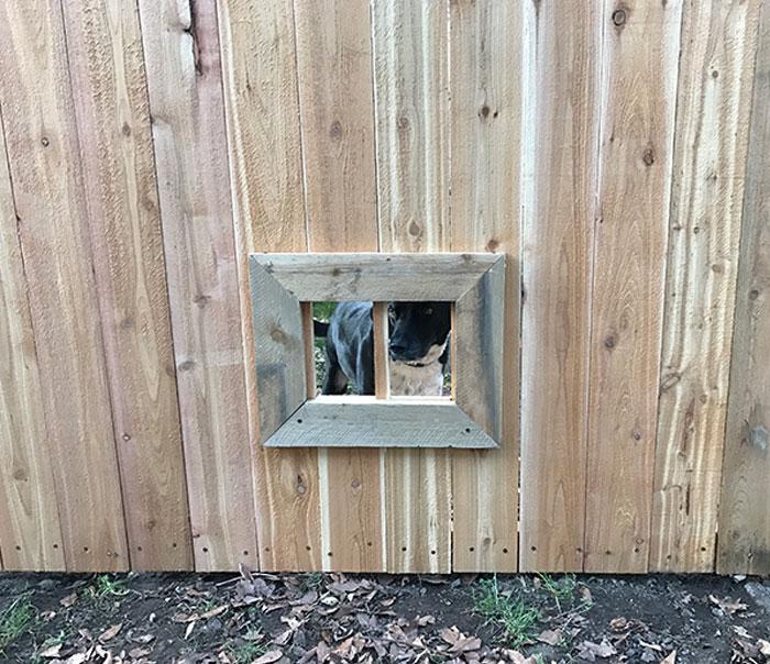 Mi vecino ha estado construyendo una nueva valla. Le sugerí una ventana para su perro Jack, a quien le gusta saludarnos todos los días a través de un listón que falta. Hoy vi esto