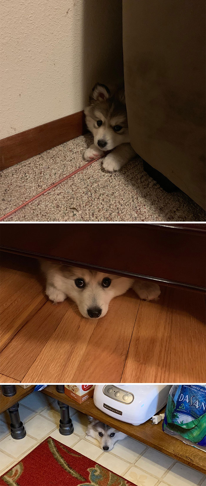 Creo que mi perro encaja bien aquí