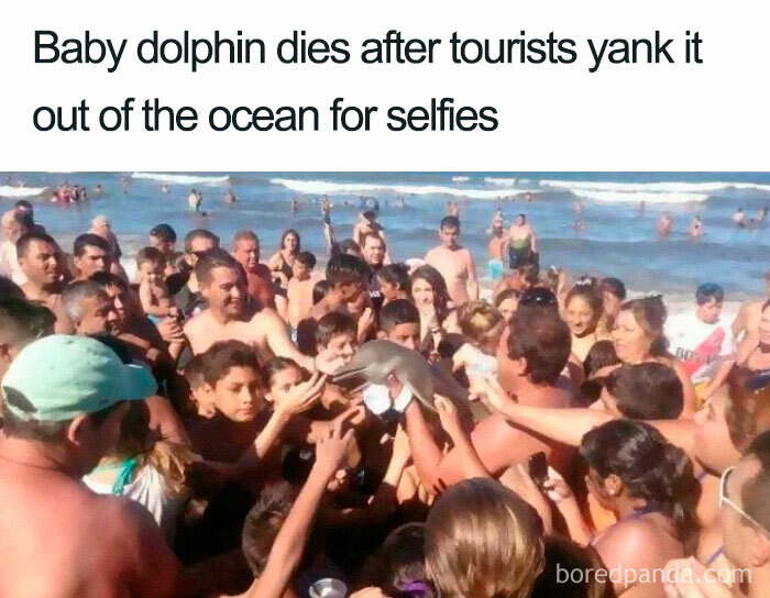 Killing A Dolphin For Selfies