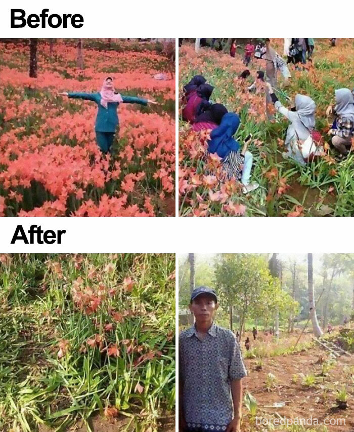 His Beautiful Flower Field Got Trampled By Tourist