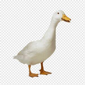 Sentient Duck