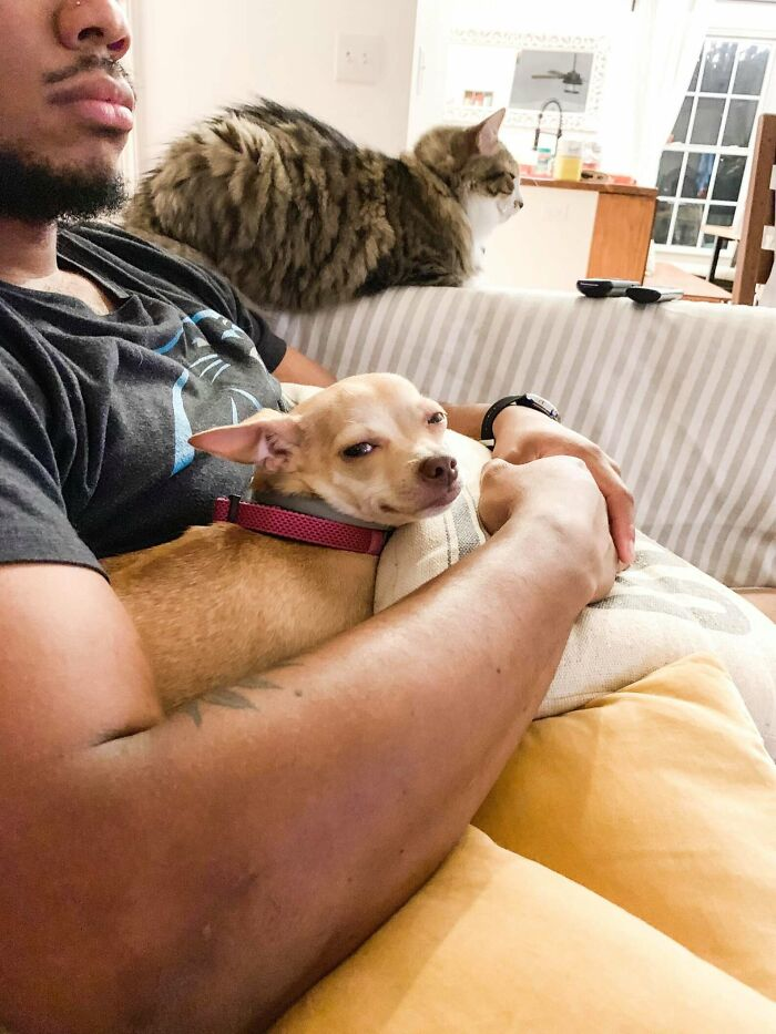 Love Story Of A Man That Hated Small Dogs And A Chihuahua That He Now Tucks In Every Night