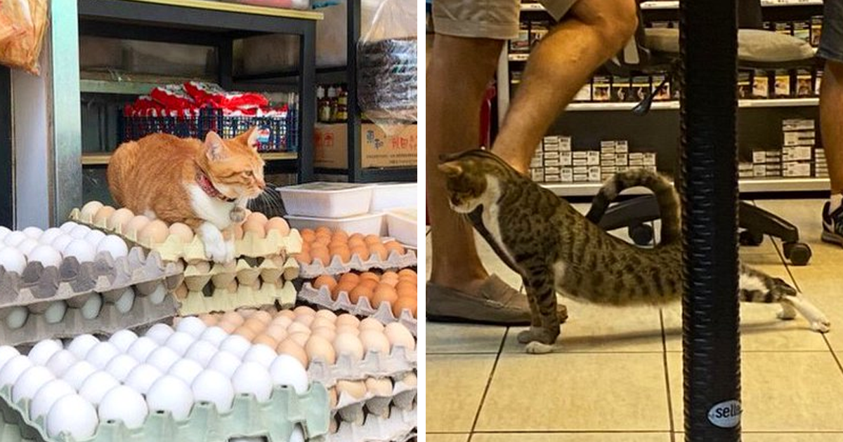 This Twitter Account Collects Photos Of Cats In Small Shops Looking Like They Own The Place (86 New Pics) - bored panda