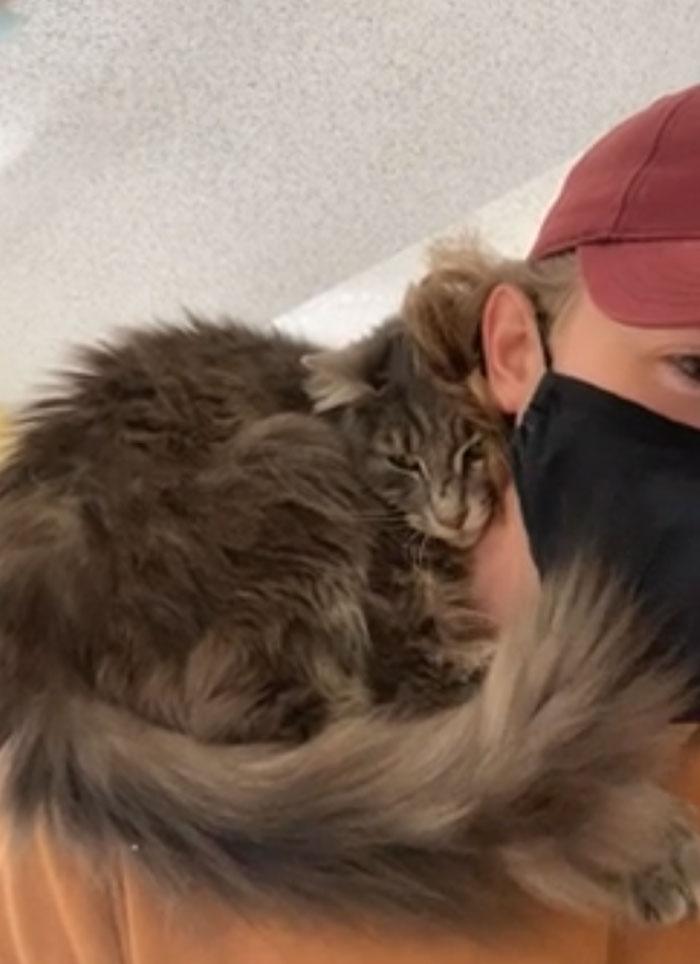 A Los 2 Segundos De Conocer Al Gato Que Estaba Adoptando, Se Subió A Mis Hombros