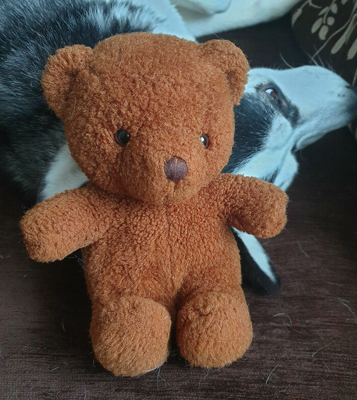 My Old Teddy Bear. Propped Up On My Dog