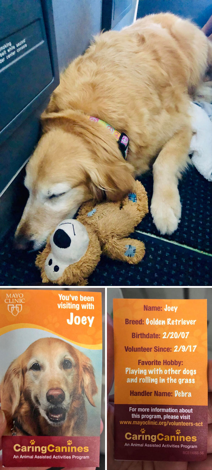 Joey The Therapy Dog Was Spotted On A Plane Taking A Well-Deserved Nap (Pic Taken With Permission). He Visits Patients In Hospitals And Even Has His Own Business Card