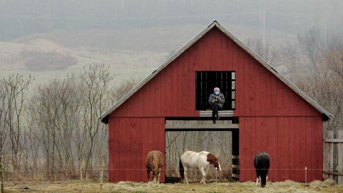 Bernie In A Barn