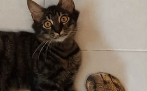 Un padre compra unos calcetines que parecen patas de gato y su hija comparte la divertida reacción del gato que se vuelve viral