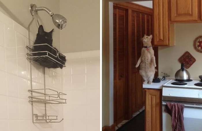 """What's Wrong With Your Cat?"" Online Group Has Owners Posting Pics Of Their Malfunctioning Cats And Here Are 50 Of The Funniest Ones"