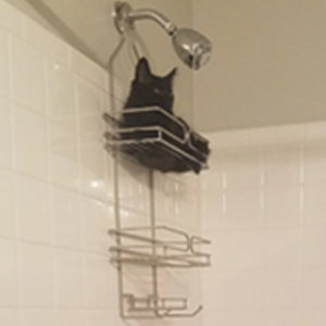 """El grupo online """"¿Qué le pasa a mi gato?"""" es donde los dueños comparten a sus gatos """"rotos"""" y aquí tienes 50 de los más divertidos (Nuevas fotos)"""