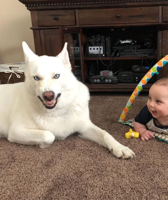 Step 1: Try To Take Cute Pic Of Dog And Baby. Step 2: Dog Sneezes During Pic. Step 3: Accidentally Capture My Dogs Inner Demon, And My Son Thinks It's Funny