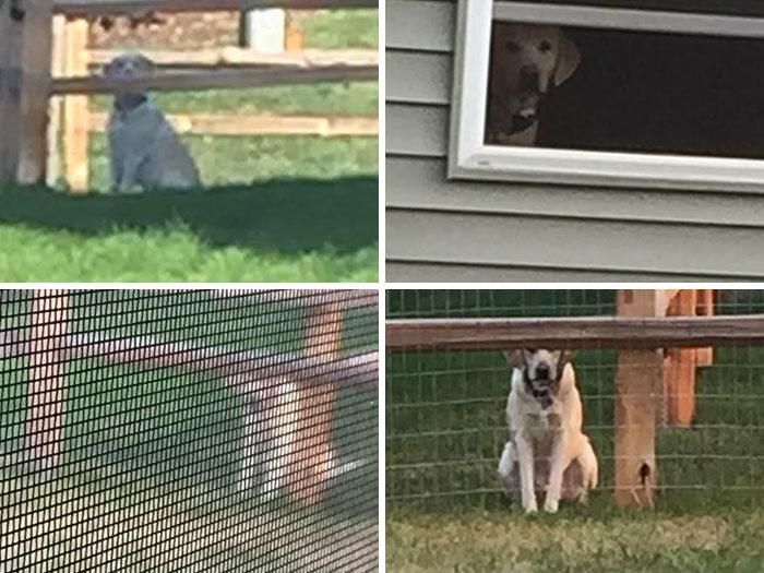 Algunas fotos del perro de mi vecino acosándome