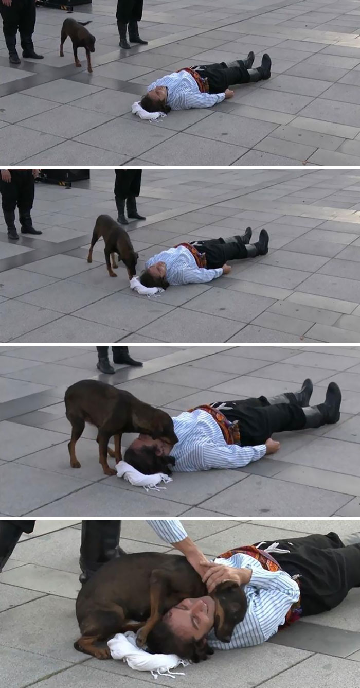 Stray Doggo Interrupts Street Performance In Turkey To Help The Actor Who Was Pretending To Be Hurt. What A Pure Heart
