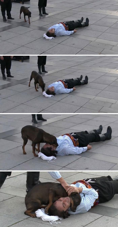 Perro callejero interrumpiendo una actuación en Turquía para ayudar a un actor que fingía estar herido