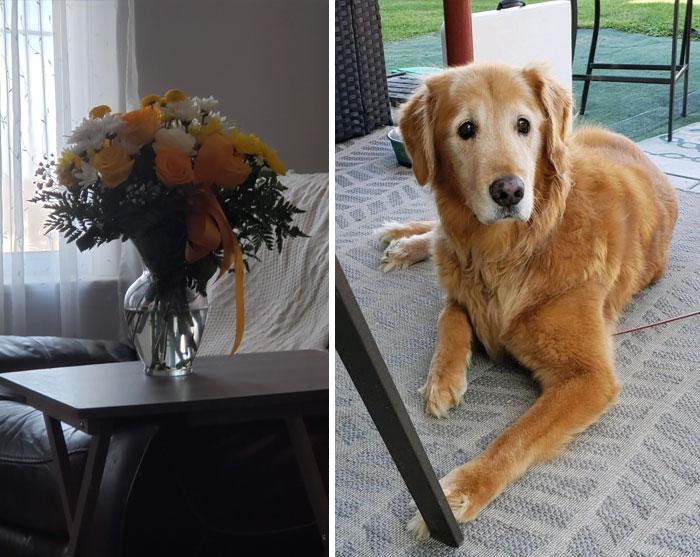 Encargamos un juguete para nuestro perro en Chewy, pero murió antes de que le llegara. No solo nos han devuelto el dinero, nos han mandado flores del color de su pelaje