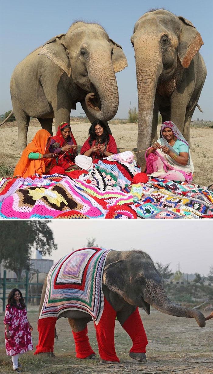 Las habitantes de este pueblo en India hicieron jerseis gigantes para estos elefantes rescatados