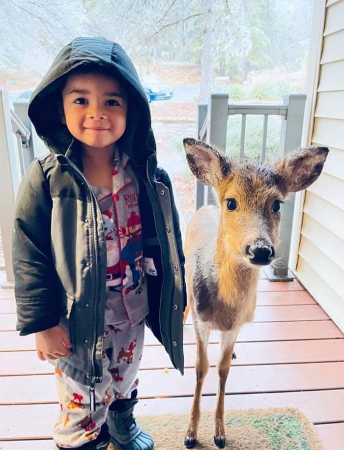 Este niño de 4 años en Virginia salió fuera a jugar y volvió a casa con un nuevo amigo