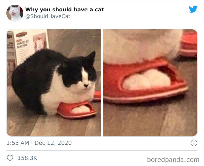 Why-You-Should-Have-Cat