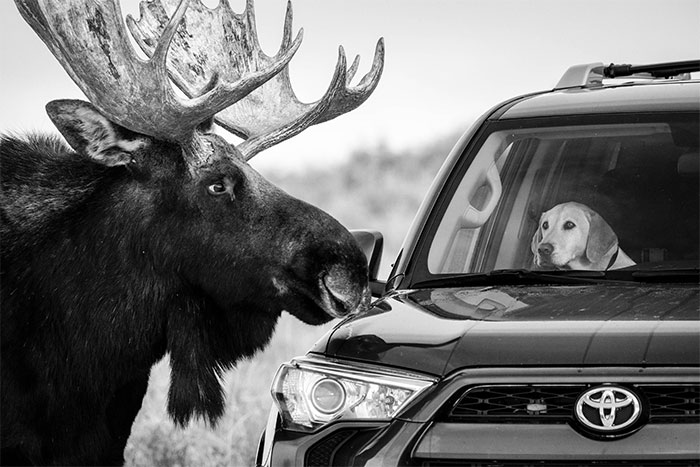 25 Pics From The 'Wildlife Photographer Of The Year' Contest That The Public Loved Most