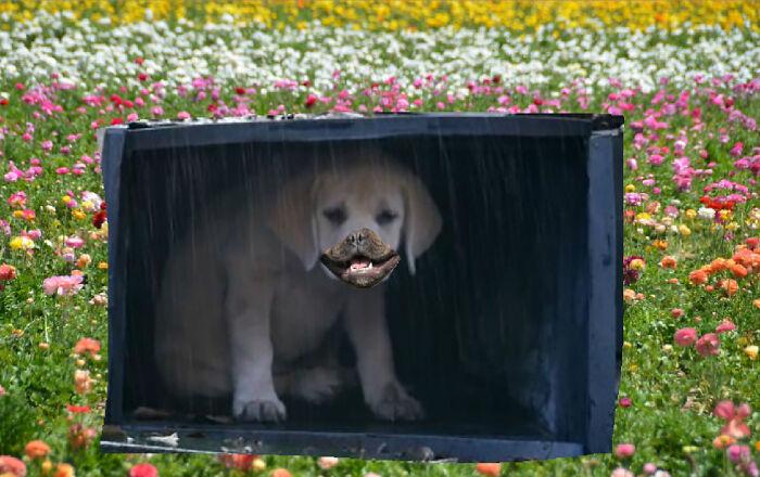 No Sad Doggo Here