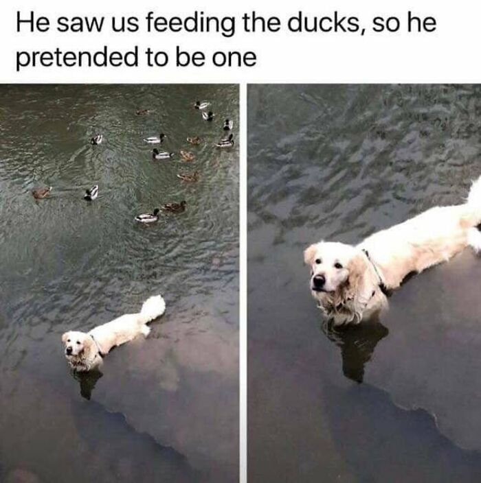 Something My Dog Would Do...
