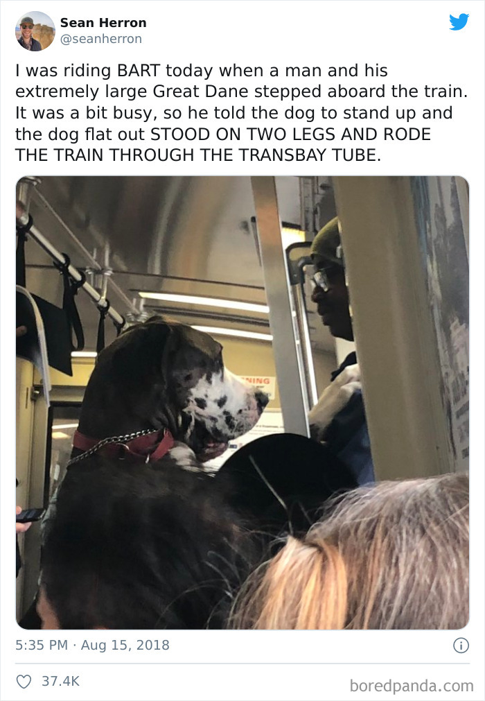 Dog Riding The Train On Two Legs