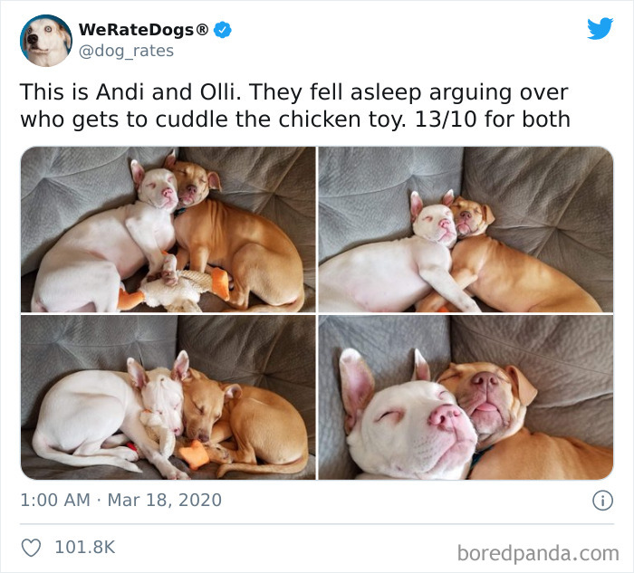 We-Rate-Dogs-Twitter