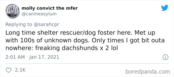 Funny-Informative-Dachshunds-Tweets