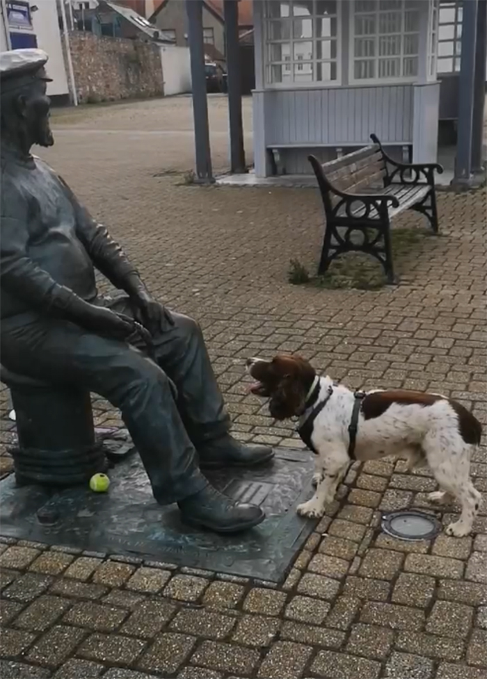 He Has Been Known To Accost People For Ages If He Thinks They Will Throw A Ball Or Stick For Him