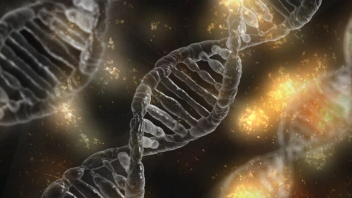Til Nearly 8% Of The Human Genome Is Virus Dna. Meaning Some Of Our Ancestors Survived A Virus But Still Carry The Dna It Inserted