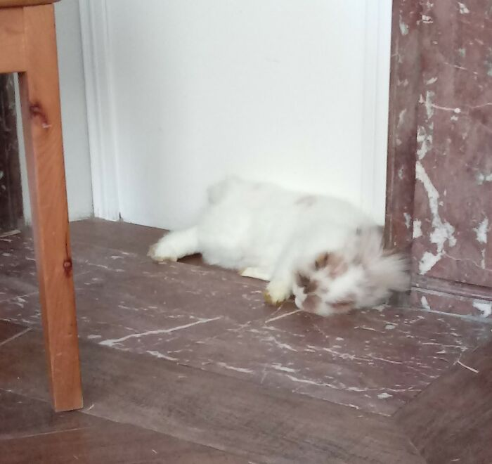 """The Good Old """"I'm Dead"""" Rabbit Prank, Very Funny..."""