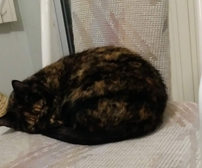 Lola Curls Up, Tucks Her Back Legs Under Her Front Legs, And Puts Her Paw Over Her Nose