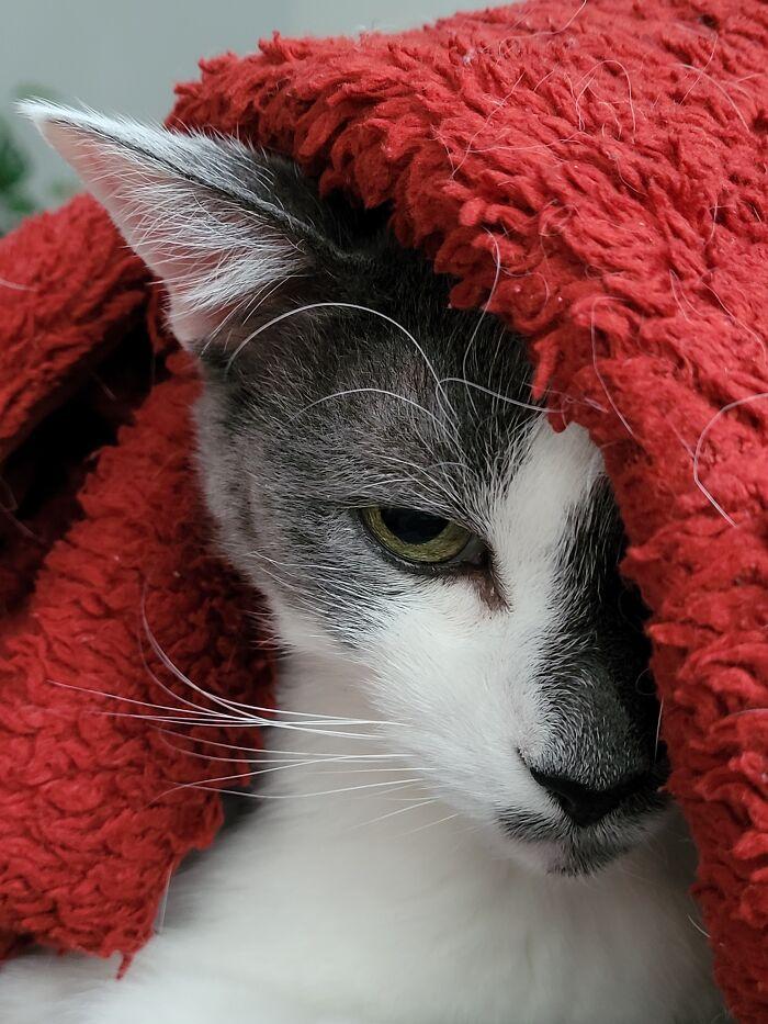 Oliver Under Wraps