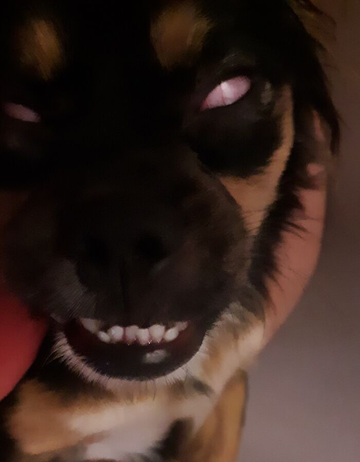 My Adorable Pup Turns Into A Not So Adorable Demon Creature When Her Eyes Roll Back In Her Sleep. (Her Jagged Teeth Really Complete The Creepy Look) Yikes!