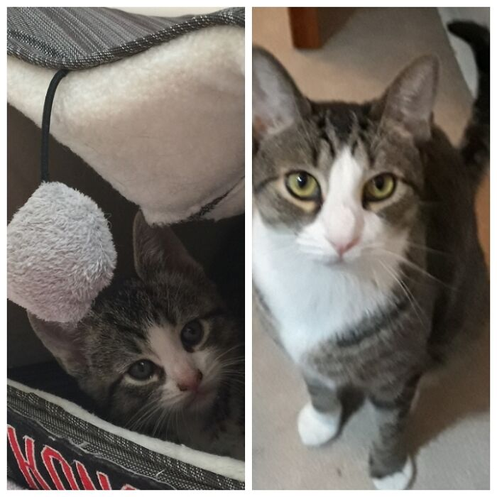 Moses Day 1 And Today Almost Five Years Later.