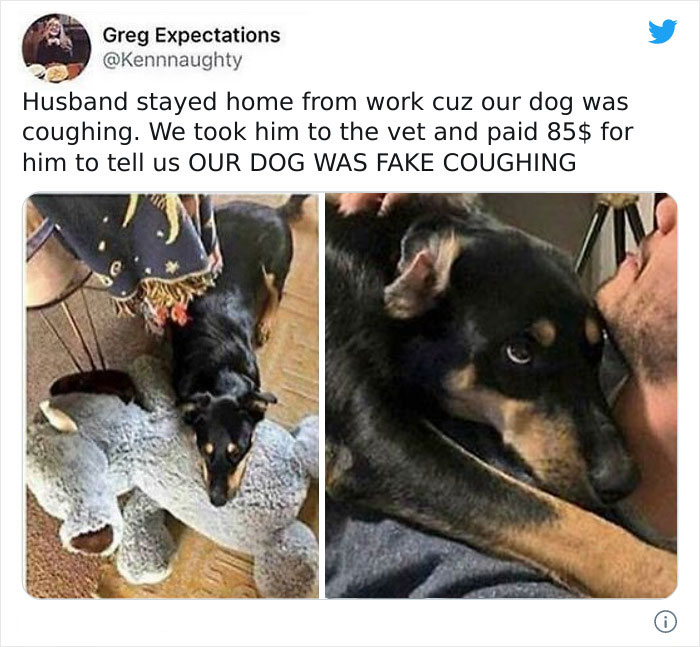 Dog Intentionally Fake Coughs To Get More Attention, If This Isn't Intelligent Behaviour I Don't Know What Is