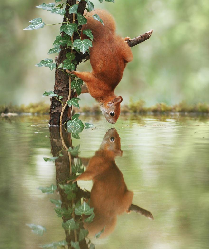 Austrian Wildlife Photographer Captures Nature's Magical Moments (35 Pics)