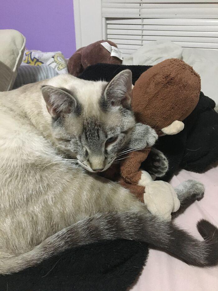 He Likes To Sleep With Stuffed Animals