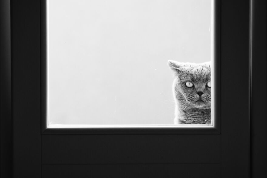 """On Watch. """"Who Are You? What Do You Want Human?"""""""