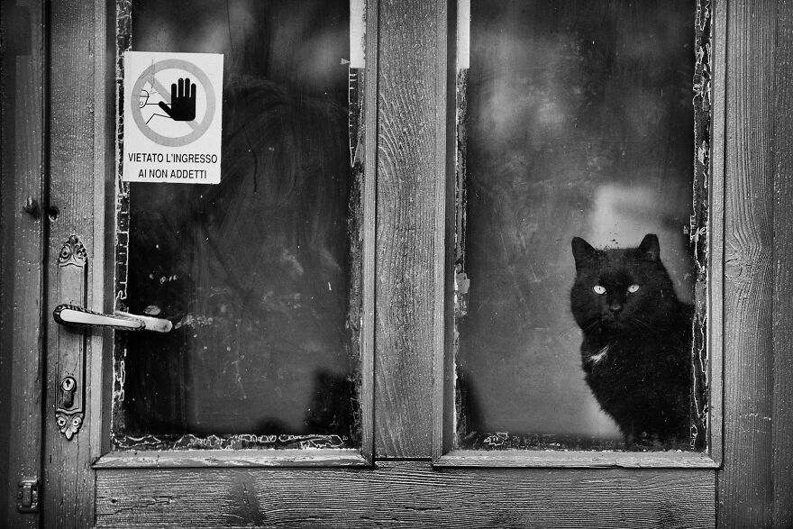 """""""Authorized Personnel Only. You Get That Human?"""""""
