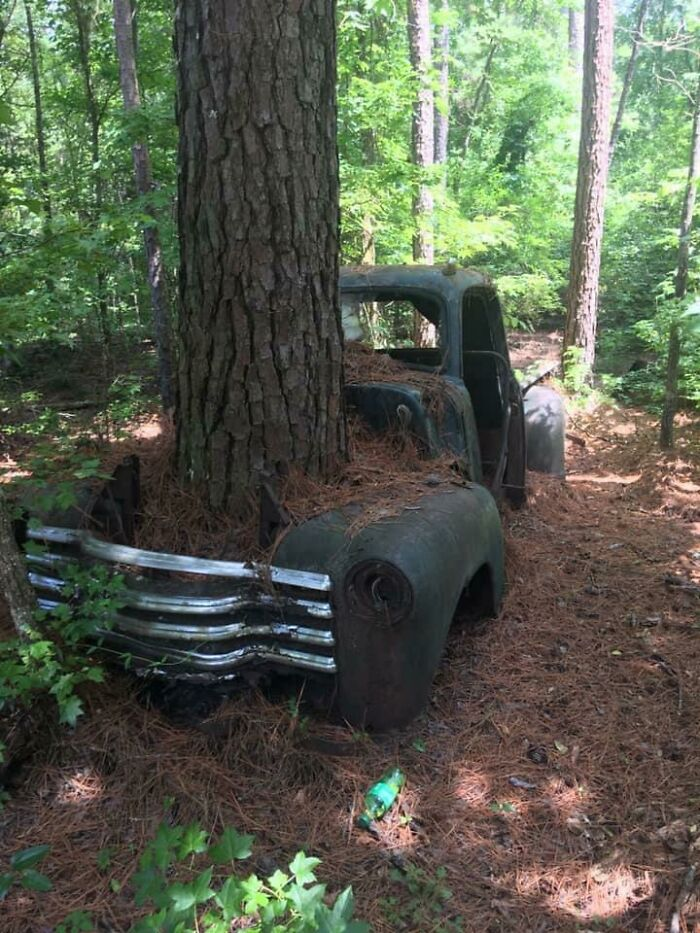 This Tree Growing Through An Old Truck