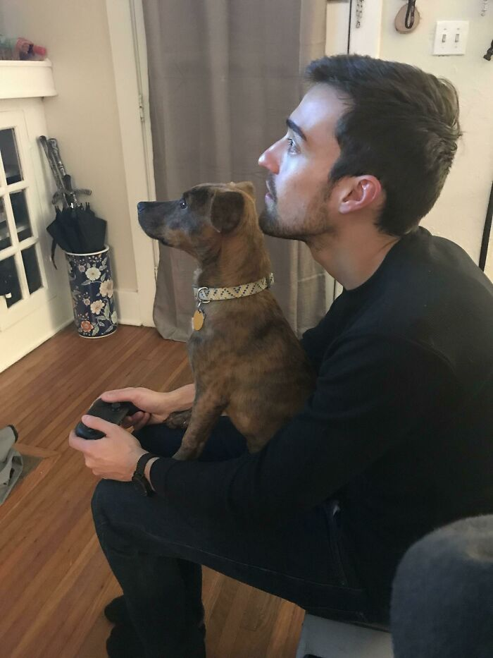 My BF And Dog When They Play A Video Game