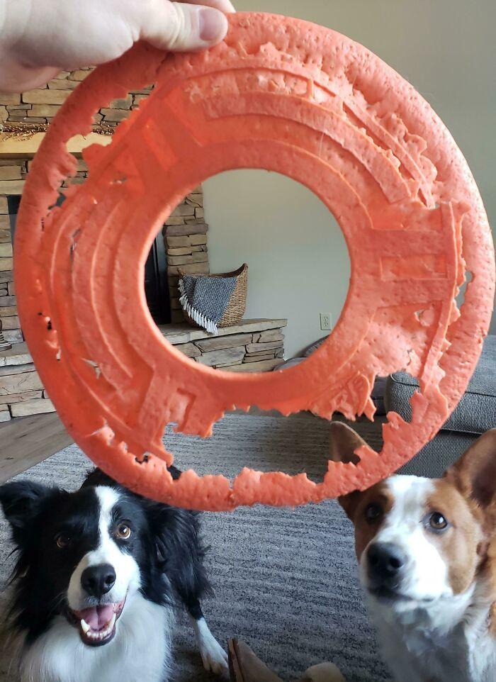 My Dogs' Nerf Frisbee. Still Their Favorite