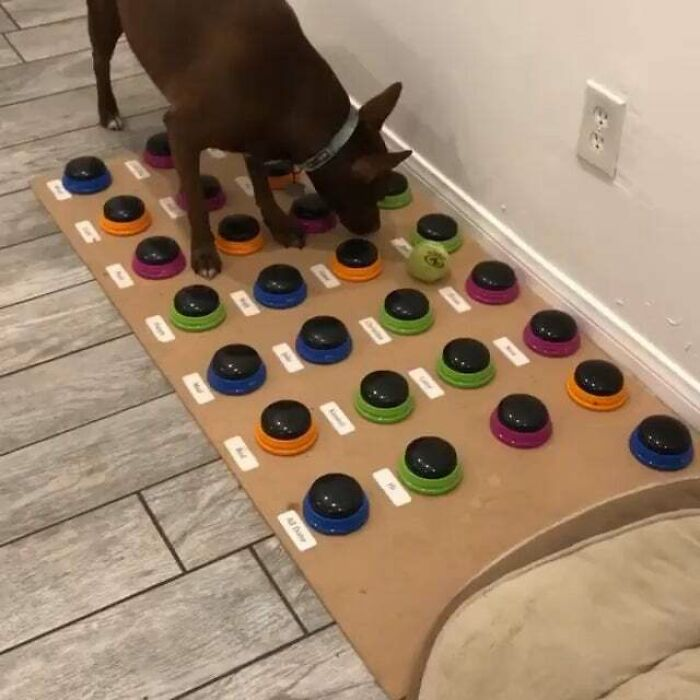 Dog Learns To Talk By Using Buttons That Have Different Words, Actively Building Sentences By Herself